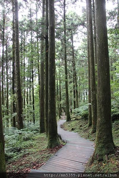 0623東眼山自導式步道 (54).JPG