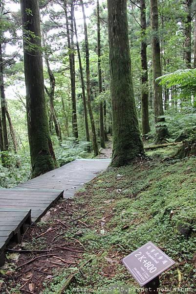 0623東眼山自導式步道 (55).JPG