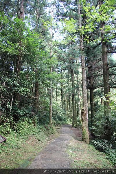 0728東眼山親子峰步道 (19).JPG