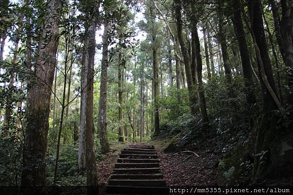 0728東眼山親子峰步道 (29).JPG