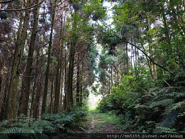 0818馬武督山 (4).jpg