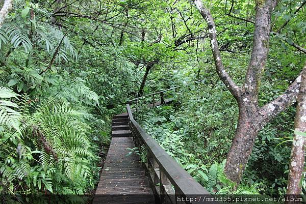 0915仁山植物園 (12).JPG