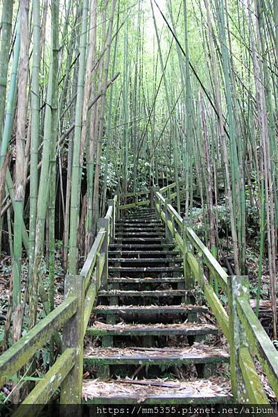 0608頂石棹步道群 (29).JPG