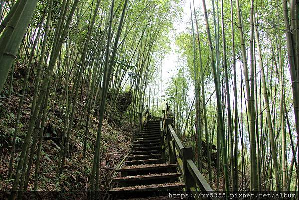 0608頂石棹步道群 (30).JPG