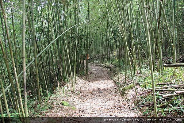 0608頂石棹步道群 (31).JPG