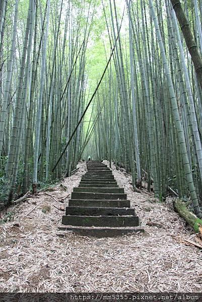 0608頂石棹步道群 (34).JPG