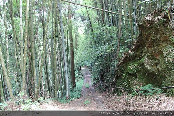 0608頂石棹步道群 (40).JPG
