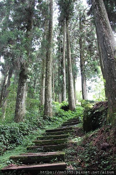 0608頂石棹步道群 (43).JPG