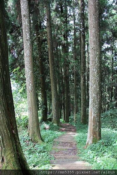 0608頂石棹步道群 (44).JPG