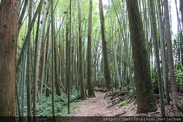 0608頂石棹步道群 (46).JPG