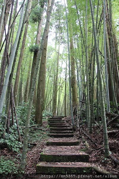 0608頂石棹步道群 (45).JPG