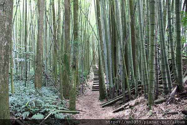 0608頂石棹步道群 (47).JPG