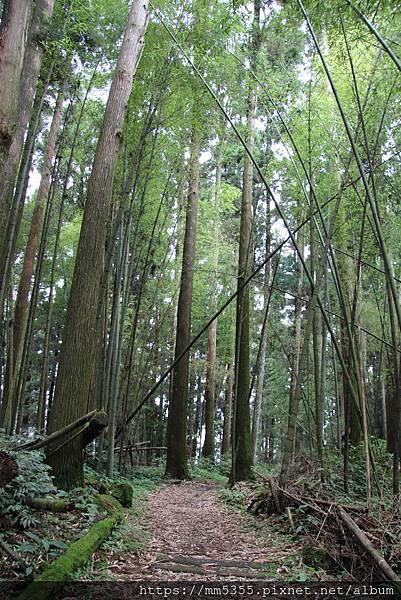 0608頂石棹步道群 (50).JPG