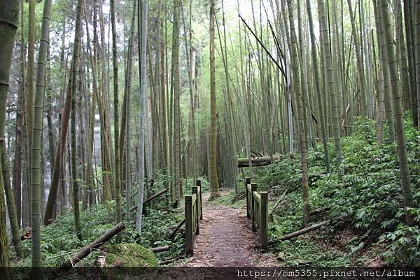 0608頂石棹步道群 (53).JPG
