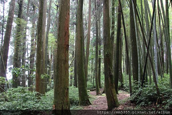 0608頂石棹步道群 (55).JPG