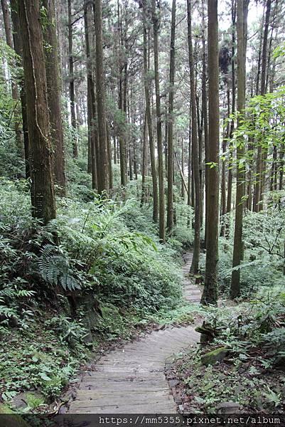 0608頂石棹步道群 (64).JPG