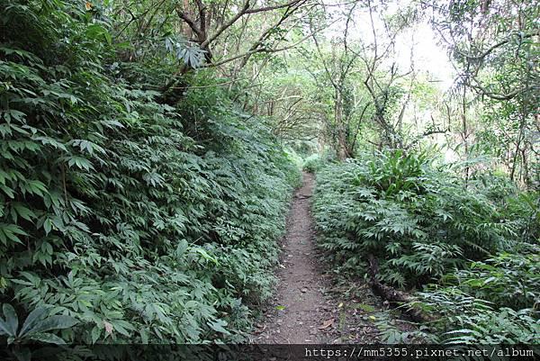 0707紅河谷步道 (16).JPG