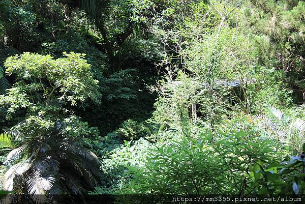 0707紅河谷步道 (46).JPG