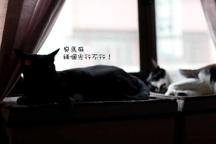 IMG_3263.jpg