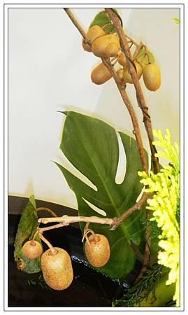 台灣獼猴桃2.jpg
