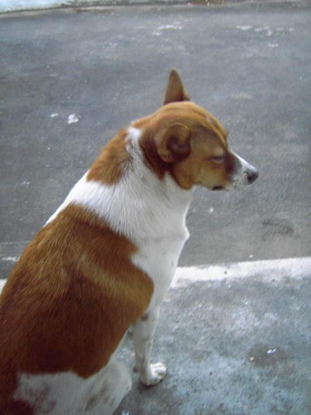 山舍-小狗