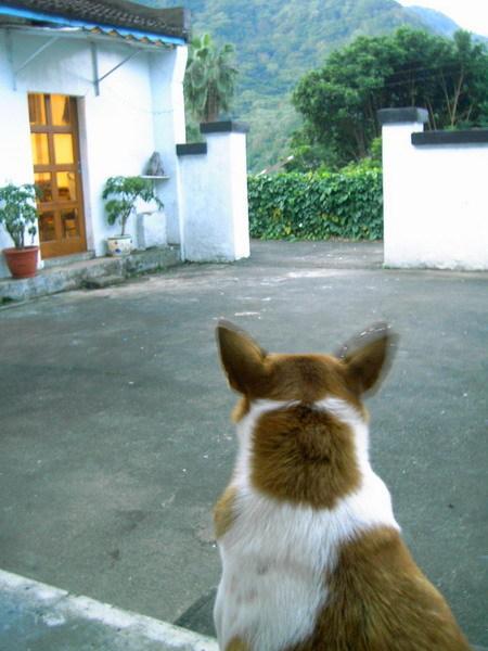 山舍-小狗3