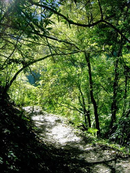 古道7-陽光灑落的步道
