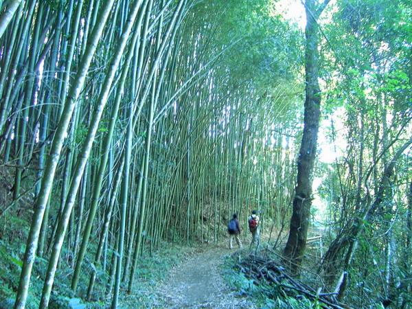 古道13-竹林小徑
