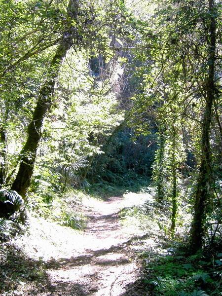 古道15-陽光灑落的步道
