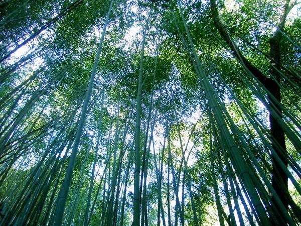 古道24-翠綠竹林