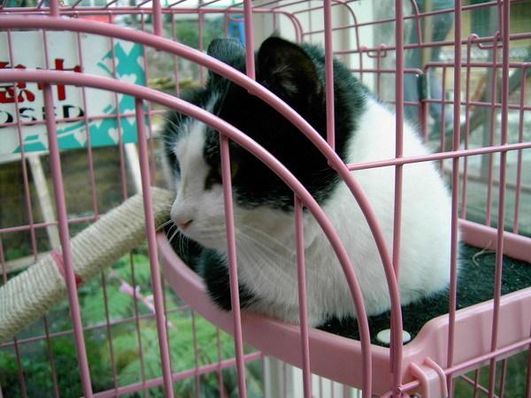 原舞曲01-店裡的貓
