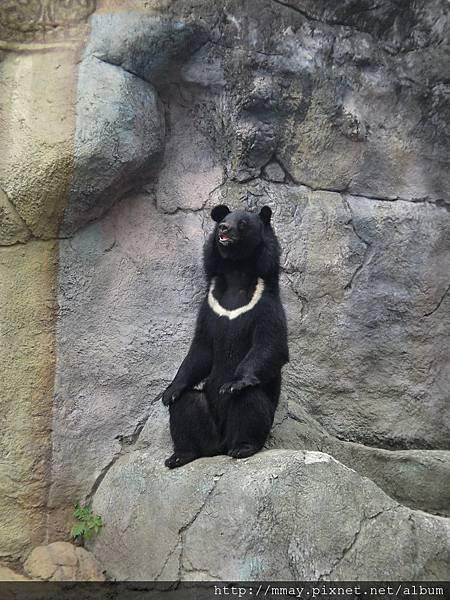 木柵動物園.台灣黑熊