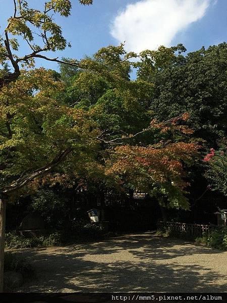 IMG_3752 (コピー).JPG
