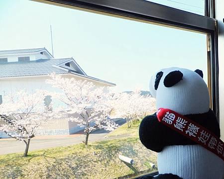 從秋田鳥海山線的小火車內賞櫻