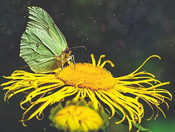 butterfly-3998806_1920