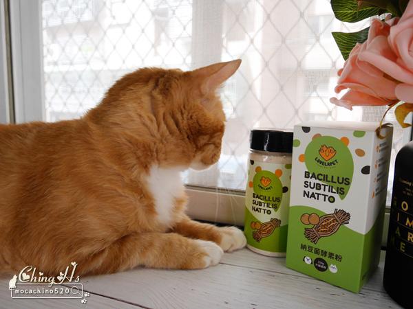 寵物保養,貓用營養品推薦,LOVELAPET愛貝寵 納豆菌酵素粉,挑嘴貓提振食慾的法寶 (2).jpg