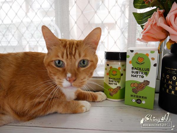 寵物保養,貓用營養品推薦,LOVELAPET愛貝寵 納豆菌酵素粉,挑嘴貓提振食慾的法寶 (18).jpg