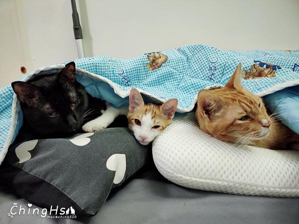 寵物居家照護分享自製寵物氧氣箱 (29).jpg