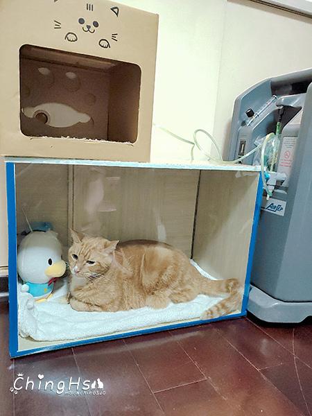 寵物居家照護分享自製寵物氧氣箱 (12).jpg