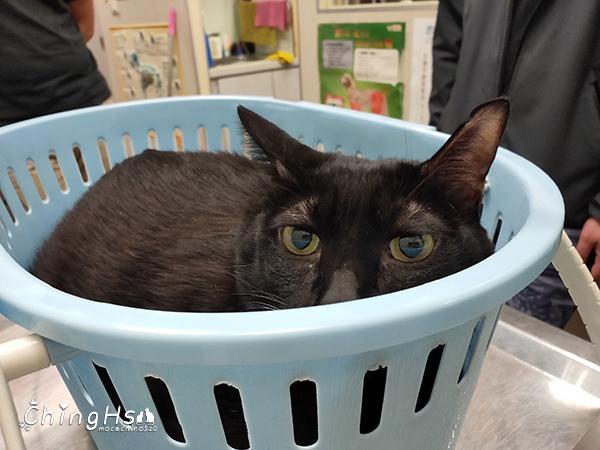 寵物居家照護分享自製寵物氧氣箱 (13).jpg