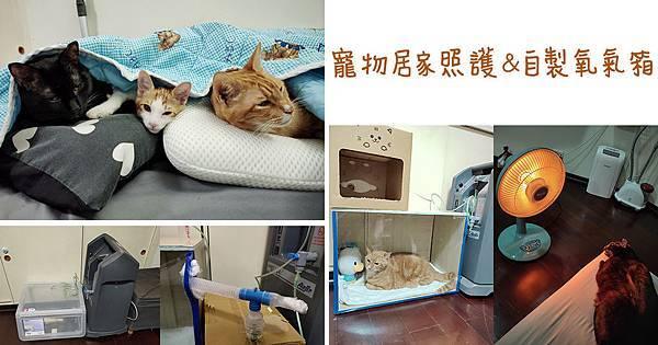 寵物居家照護分享自製寵物氧氣箱 (1).jpg