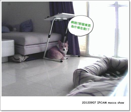 IPCAM0907-003