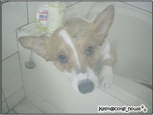 shower-02.jpg