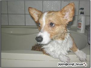 shower-03.jpg