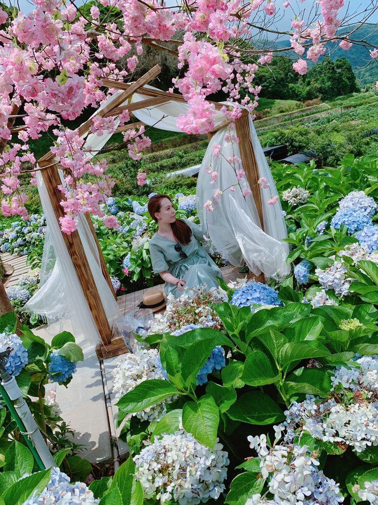 大梯田花卉生態農場|陽明山竹子湖|繡球花21.jpg