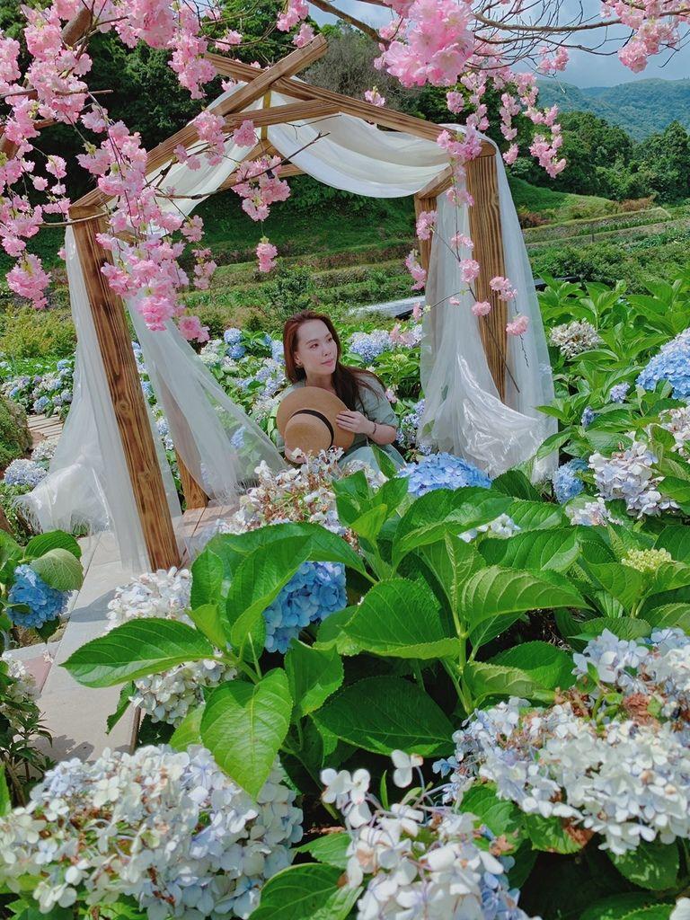 大梯田花卉生態農場|陽明山竹子湖|繡球花20.jpg