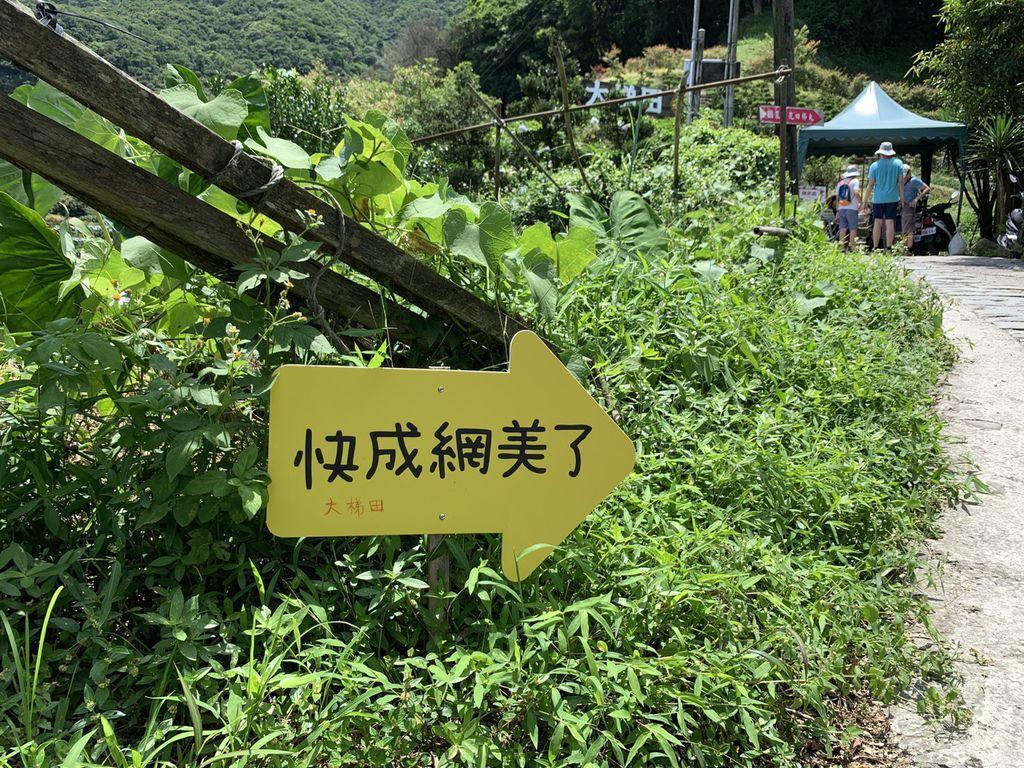 大梯田花卉生態農場|陽明山竹子湖繡球花01.jpg
