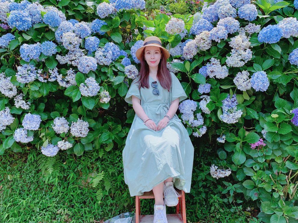 大梯田花卉生態農場|陽明山竹子湖|繡球花16.jpg