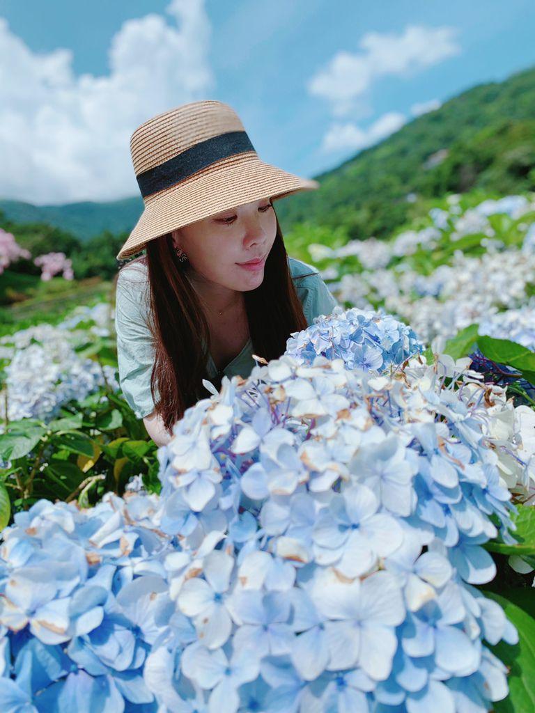 大梯田花卉生態農場|陽明山竹子湖|繡球花18.jpg
