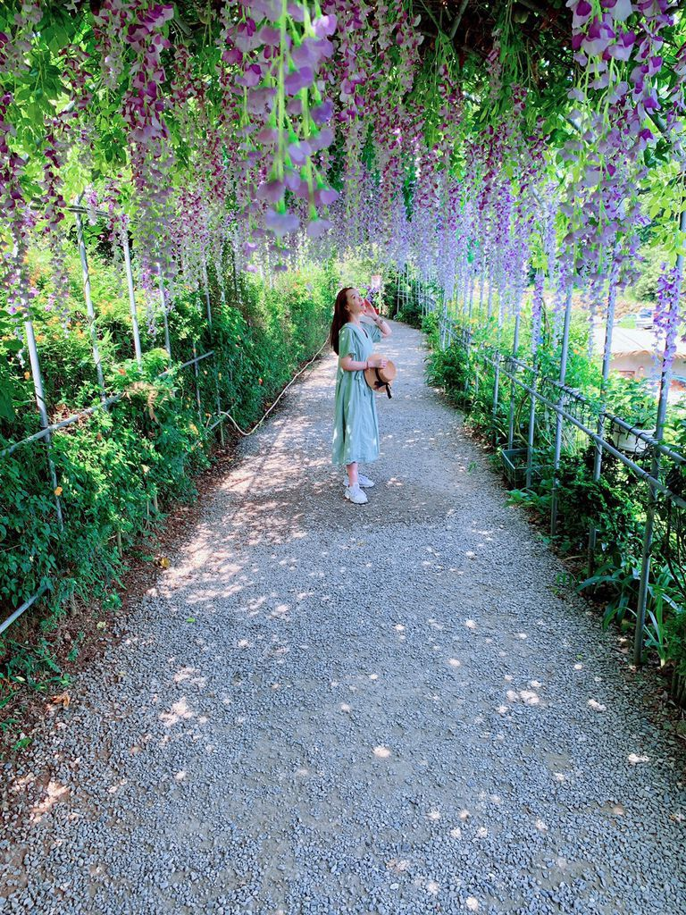 大梯田花卉生態農場|陽明山竹子湖|紫藤花06.jpg